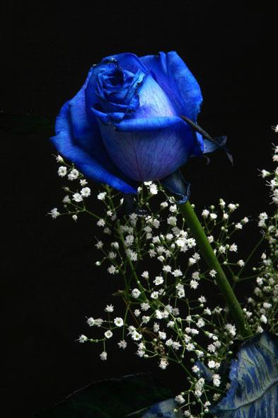 MY FAVORITE THE DIVINE BLUE ROSE